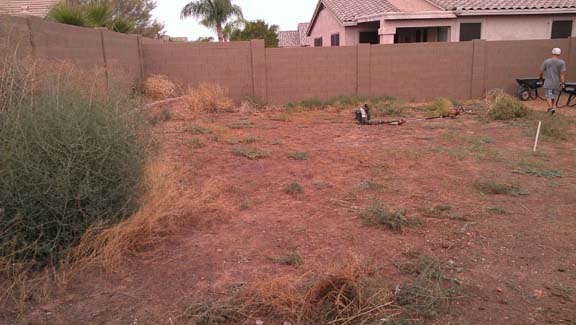 Arizona backyard landscape before