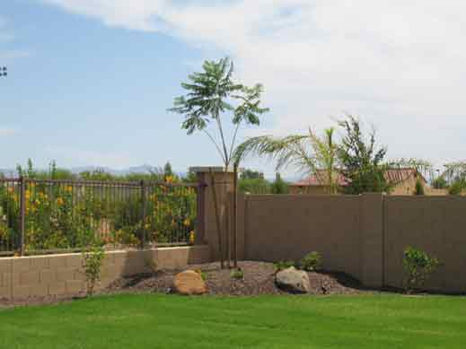 tropical yard sod palm in mound