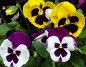 Arizona Winter Flower Guide