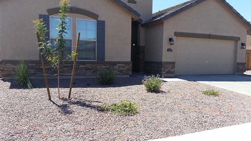 Desert Yard Remodel Az Living Landscape
