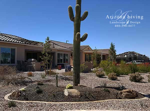 landscape-design-saguaro